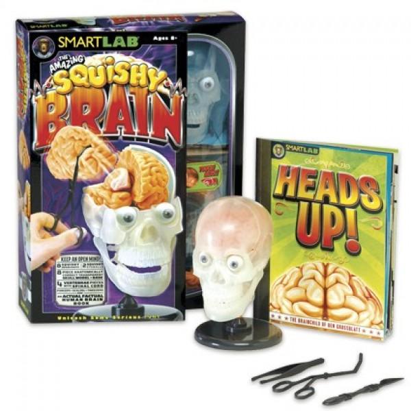 Squishy Brains Toys : The Amazing Squishy Brain