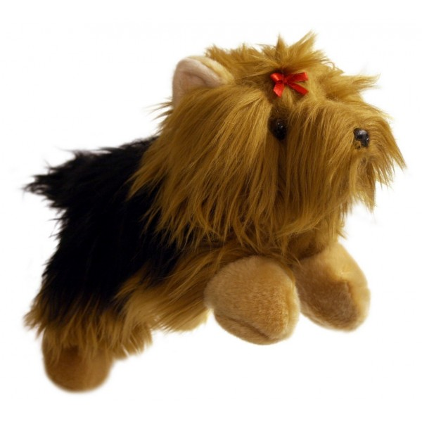 Yorkshire Terrier - Full Bodied