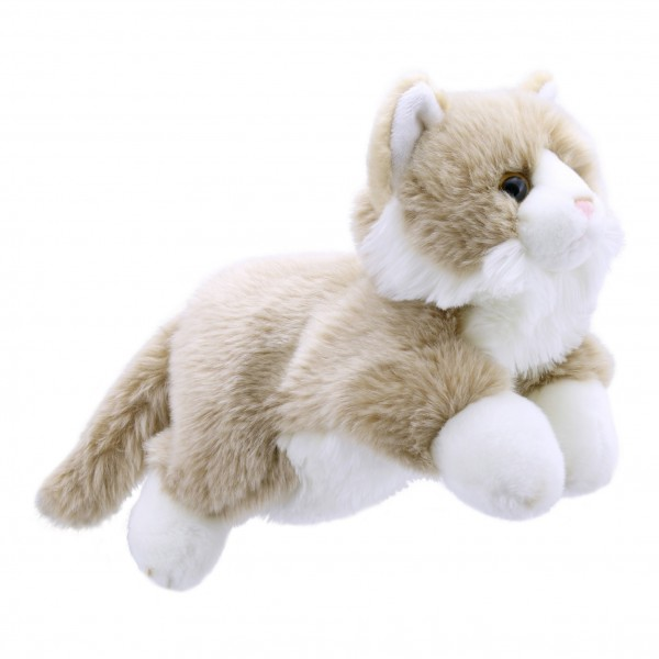 Cat Beige White - Full Bodied