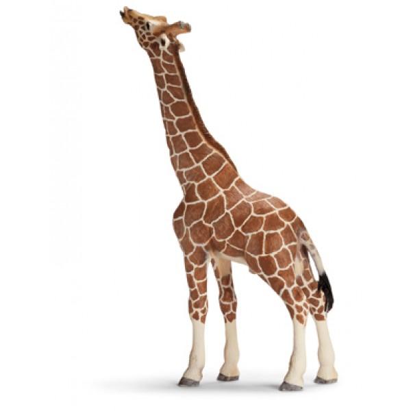 Giraffe Male - Schleich